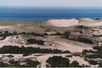 The Dunes at Cape Cod National Seashore